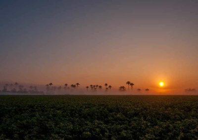 Palm tress in fog